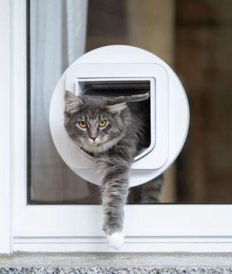 Sliding Glass Doggie Door Installers In Flagstaff Arizona